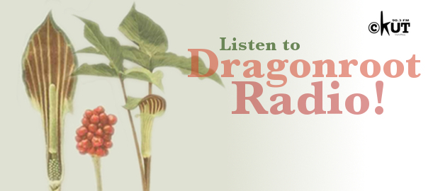 "Image of a dragon root plant with text ""Listen to Dragonroot Radio!"""