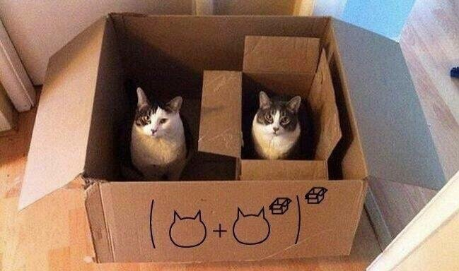 Two cats sitting in boxes